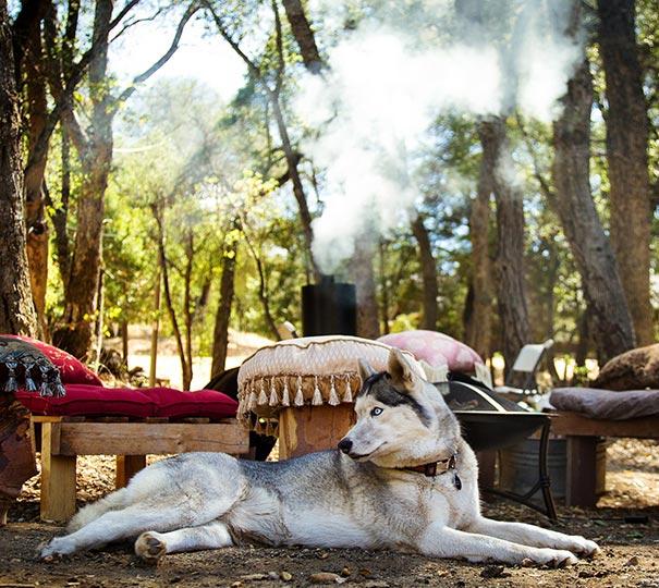 Corso di sopravvivenza con il proprio cane